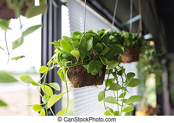 Flowerpots hanging on window sill