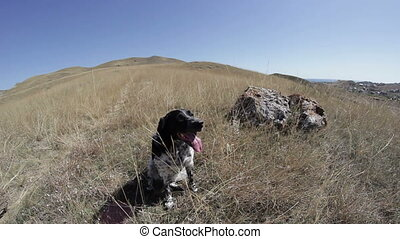 The dog sits on the edge of the hill on a hot day
