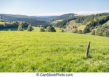 Rolling landscape. - Rolling landscape with meadows and pine...