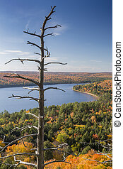 Dead Pine and Lake Surrounded by Fall Foliage - Ontario -...