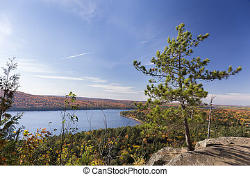 White Pine Tree Overlooking an Autumn Lake - Ontario, Canada...