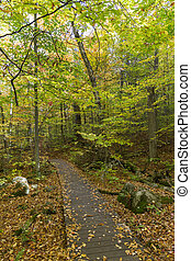 Boardwalk in a Fall Forest - Ontario, Canada - Boardwalk...