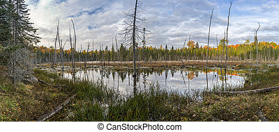 Beaver Pond in Autumn - Ontario, Canada - Panorama of a...