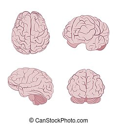 Human brain four views. Top, frontal, side, three-quarter....