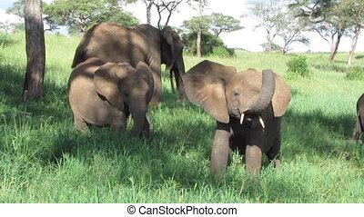 Baby Elephant in Afrika