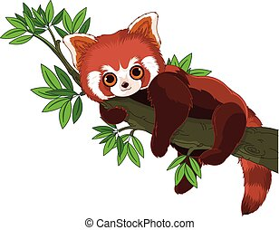 Red Panda - Cute panda is sleeping on a branch