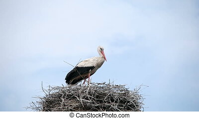 Crane Bird in his Nest