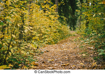 Narrow path in colorful autumn forest. Selective focus on...