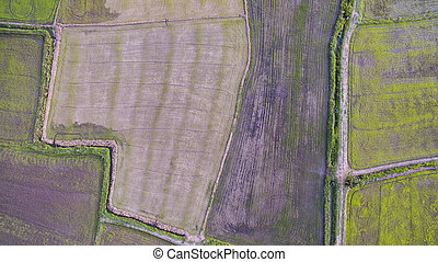 aerial view of rice paddy in agriculture field