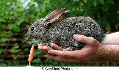 Rabbit. Feeding animal