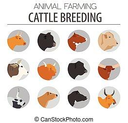 ganado, Crianza, vaca, toros, casta, icono, Conjunto, plano,...