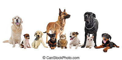 group of puppies and cats - group of dogs, puppies and cats...
