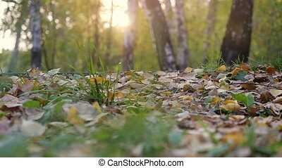 Young man in running shoes runs on fallen autumn leaves...