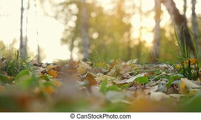 Autumn dry leaves falling on ground in autumn park in...