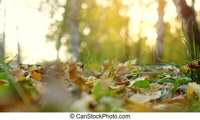 Autumn dry leaves falling on ground in autumn park. Beautiful autumn forest with sun shining. 3840x2160