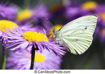 Beautiful spring flowers with butterfly in the garden