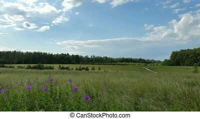 Country Russian summer landscape time lapse
