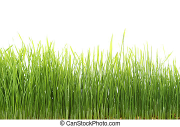 Green grass isolated on white