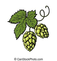 Green hop plant, sketch style vector illustration isolated...