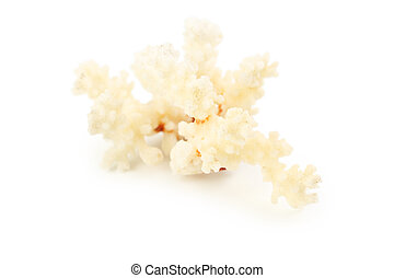Beautiful coral isolated on white