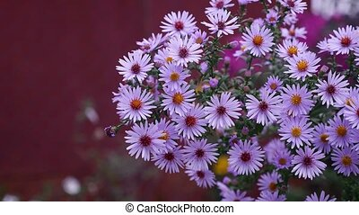 purple flowers nature bush on a red background - purple...