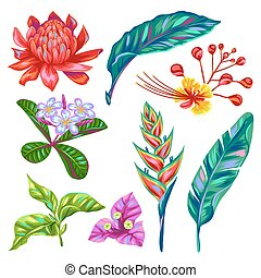 Set of Thailand flowers. Tropical multicolor plants, leaves...