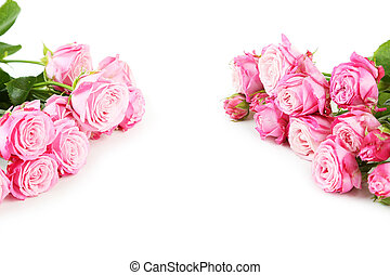 beautiful pink roses on white background