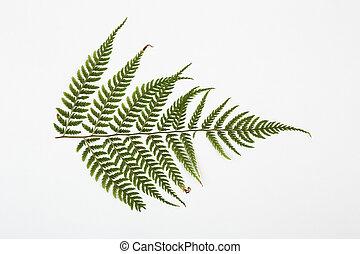 fern herbarium on white background.