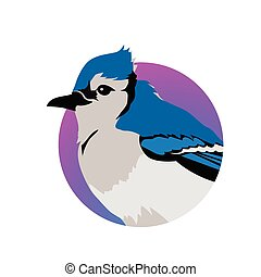Blue Jay Flat Design Vector Illustration - Blue jay vector....