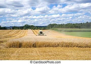 Harvesting of a grain field with an approaching combine...