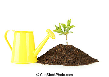 Yellow watering can with green plant in soil on white background