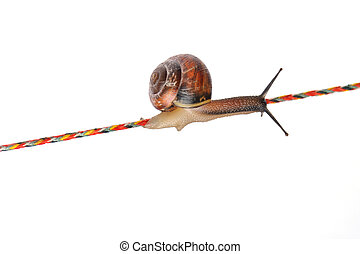 Snail on rope isolated on white background