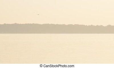 Bird flies over river or lake