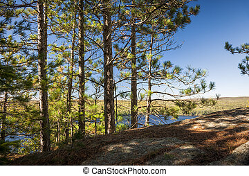 Pines on sunny cliff