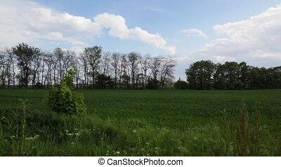 Green landscape, tilt to sky