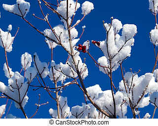 Winter Scene Detail of Snow on Tree Limbs Against a Blue Sky