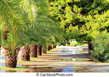 Summer day on the street with palms