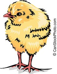 Yellow Chick - Animal Illustration of a Cute Yellow Chick