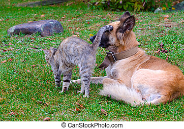 Friendship of homeless cat and dog - Communication of...
