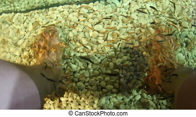 Asian traditional fish spa. Thousands of Garra rufa also...