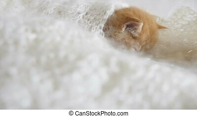 redhead little kitten asleep cat wrapped in knitted shawl...