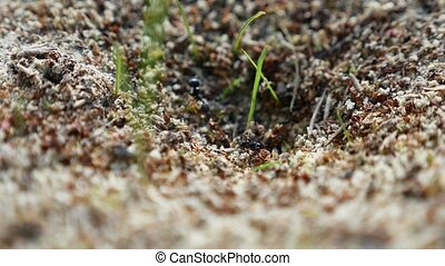 ant ants on nature insects the earth movement works - ant...