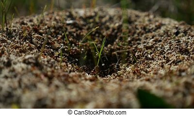 ant ants insects on the earth movement nature works - ant...