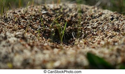 ant ants insects on the earth nature movement works - ant...