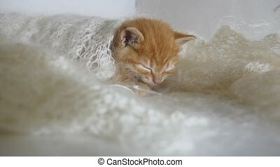 redhead little cat kitten asleep wrapped in knitted shawl...