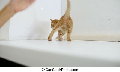 ginger kitten cat walking on the windowsill in the house -...
