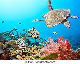 Butterflyfishes and turtle - Underwater landscape with...