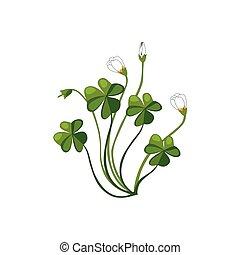 Shamrock Wild Flower Hand Drawn Detailed Illustration. Plant...