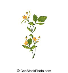 Celandine Wild Flower Hand Drawn Detailed Illustration....