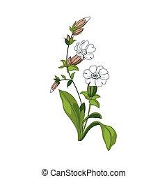 White Marigold Wild Flower Hand Drawn Detailed Illustration....